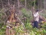 2009 Land Clearing