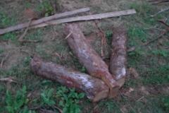 guyana-december-2011-014_0