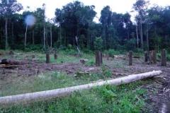 guyana-december-2011-019