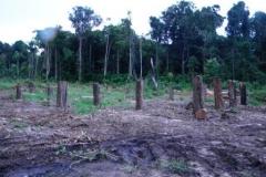 guyana-december-2011-021