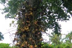guyana-agust-2011-168