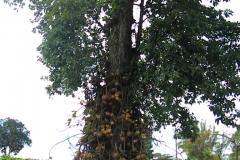 guyana-agust-2011-169