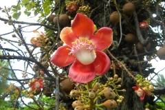 guyana-agust-2011-170