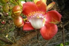 guyana-agust-2011-174