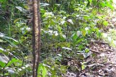 guyana-agust-2011-176